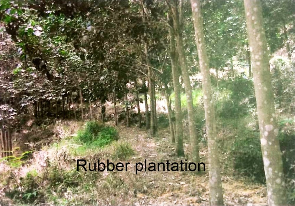 Rubber estate land for sale